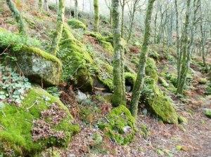 Verde tapiz para las piedras